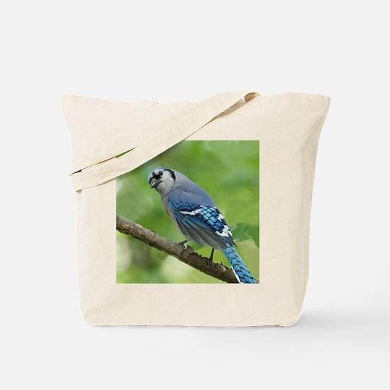 Unique Blue jay Tote Bag