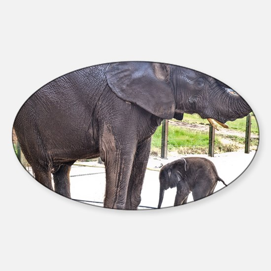 BATH TIME FOR BABY ELEPHANT AND MOTHER Decal