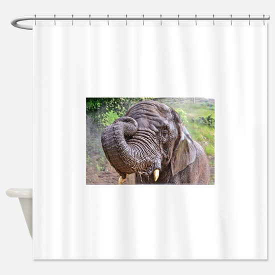 BATH TIME FOR ELEPHANT AT WEST MIDL Shower Curtain