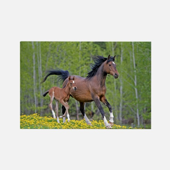 Horse Mother with Foal Magnets