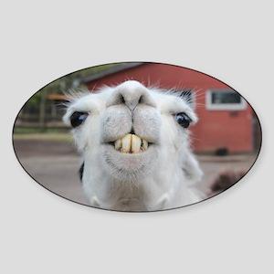 Funny Alpaca Llama Sticker