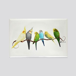Parakeets & Cockatiels Magnets