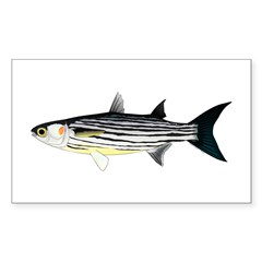 Cape Verde Mullet Decal