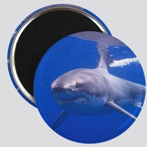 GREAT WHITE SHARK 4 Magnet