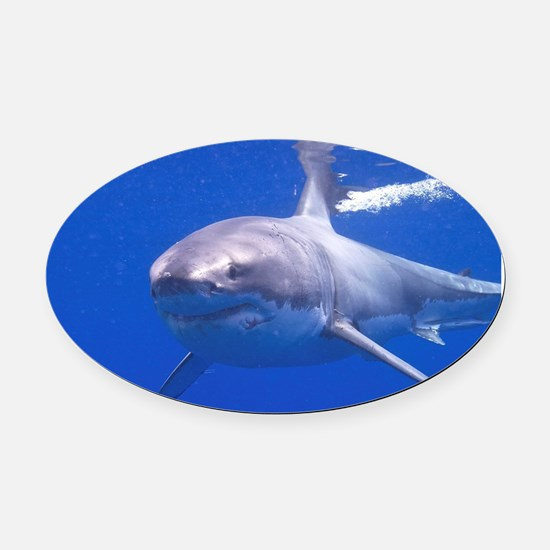 GREAT WHITE SHARK 4 Oval Car Magnet