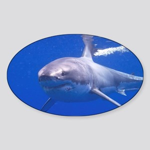 GREAT WHITE SHARK 4 Sticker (Oval)