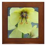 Evening Primrose Framed Tile