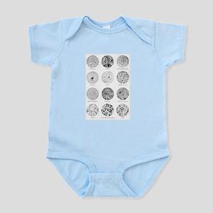 Bacterial Identification Chart Baby Light Bodysuit