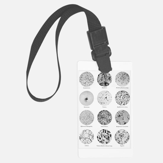 Bacterial Identification Chart Luggage Tag
