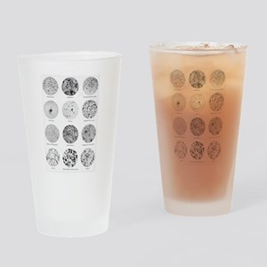 Bacterial Identification Chart Drinking Glass