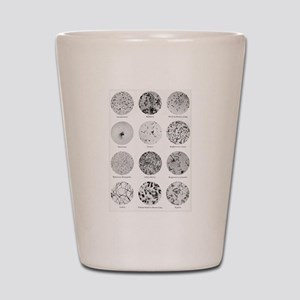 Bacterial Identification Chart Shot Glass