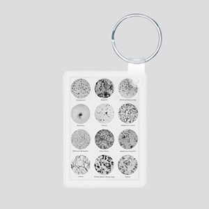 Bacterial Identification C Aluminum Photo Keychain