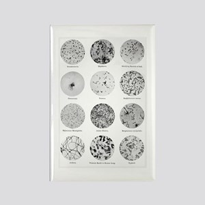 Bacterial Identification Chart Rectangle Magnet