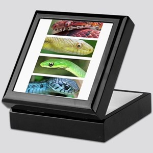 Nature's Rainbow: Snakes Keepsake Box