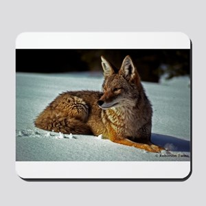 Coyote relaxing in the snow Mousepad