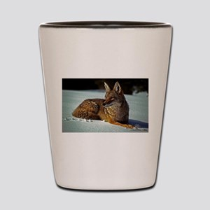 Coyote relaxing in the snow Shot Glass