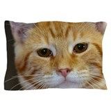 Tabby cat Pillow Cases