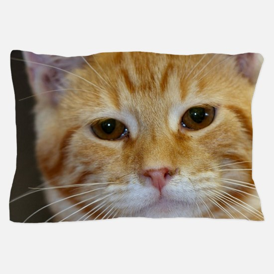 Cute Orange tabby Pillow Case
