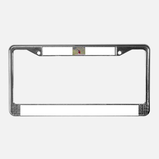 Lone Scottish bagpiper, Highla License Plate Frame