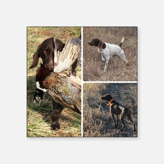 "Cute German shorthair pointer Square Sticker 3"" x 3"""