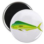 Mahi-Mahi Dolphinfish 3 Magnets