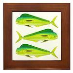 Mahi-Mahi Dolphinfish 3 Framed Tile