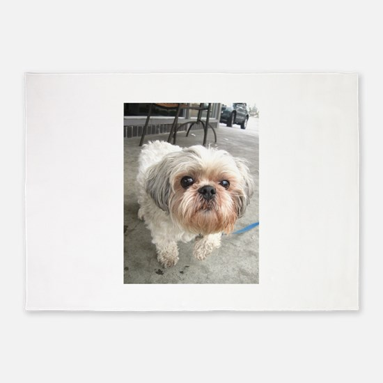 small dog at cafe 5'x7'Area Rug