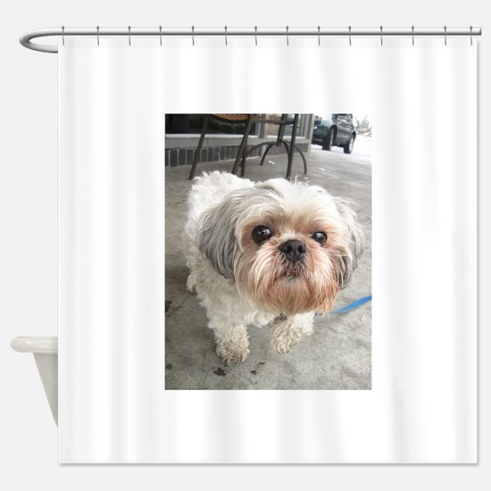 small dog at cafe Shower Curtain