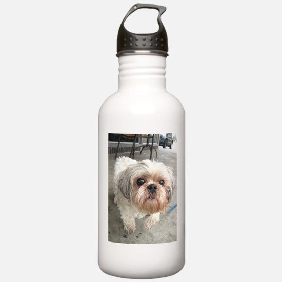 small dog at cafe Water Bottle