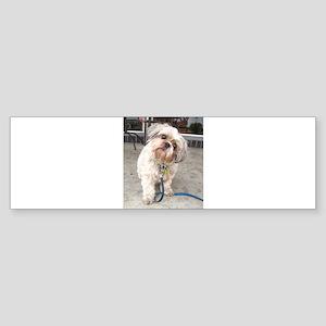 dog on leash at cafe Bumper Sticker