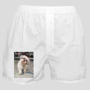 dog on leash at cafe Boxer Shorts