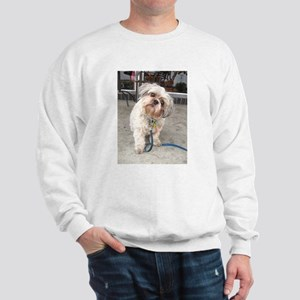 dog on leash at cafe Sweatshirt