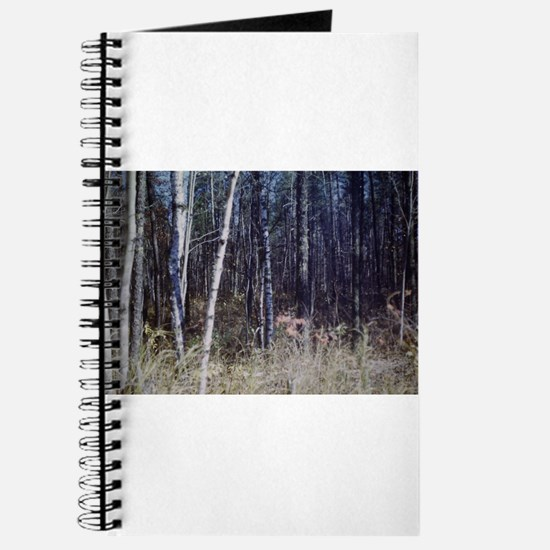 PICT0050.JPG birch grove in forest Journal