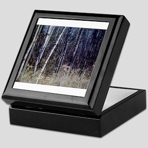 PICT0050 birch grove in forest Keepsake Box