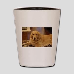 Nala the golden inside Shot Glass