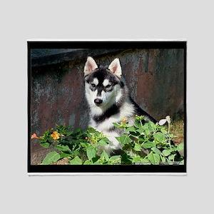 Alaskan Malamute Dog Outside Throw Blanket