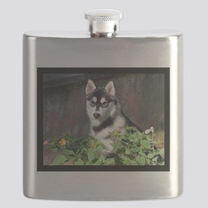 Alaskan Malamute Dog Outside Flask