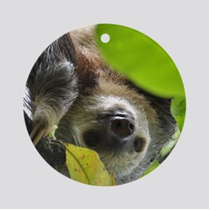 Sloth_20171105_by_JAMFoto Round Ornament