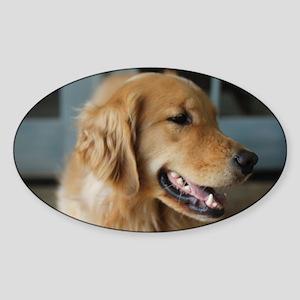 golden retriever happy Sticker