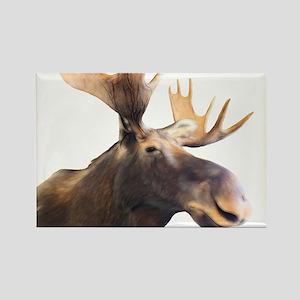 Moose Magnets