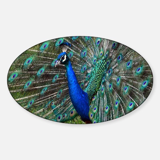 Funny Peacock zoo Sticker (Oval)