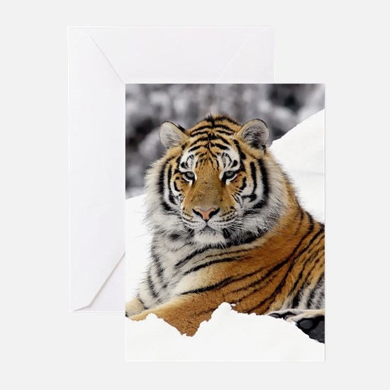 Tiger In Snow Greeting Cards