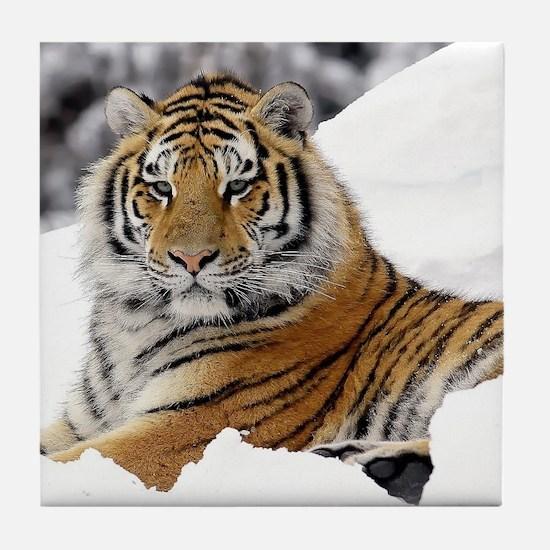 Tiger In Snow Tile Coaster