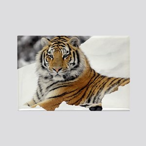 Tiger In Snow Magnets