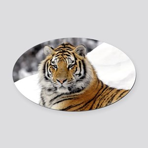 Tiger In Snow Oval Car Magnet