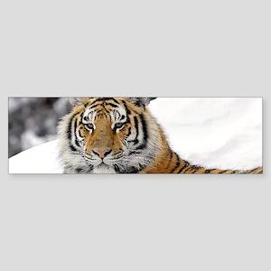 Tiger In Snow Bumper Sticker
