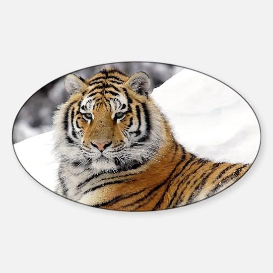 Tiger Car Accessories   Auto Stickers, License Plates & More ...