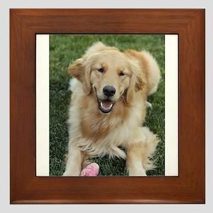 Nala the golden retroever dog Framed Tile