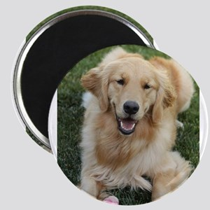 Nala the golden retroever dog Magnets