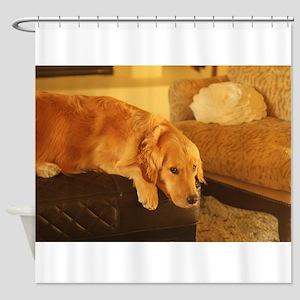golden retriever relaxin Shower Curtain